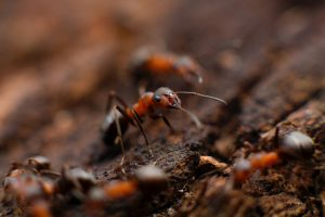 مكافحة حشرات بجازان